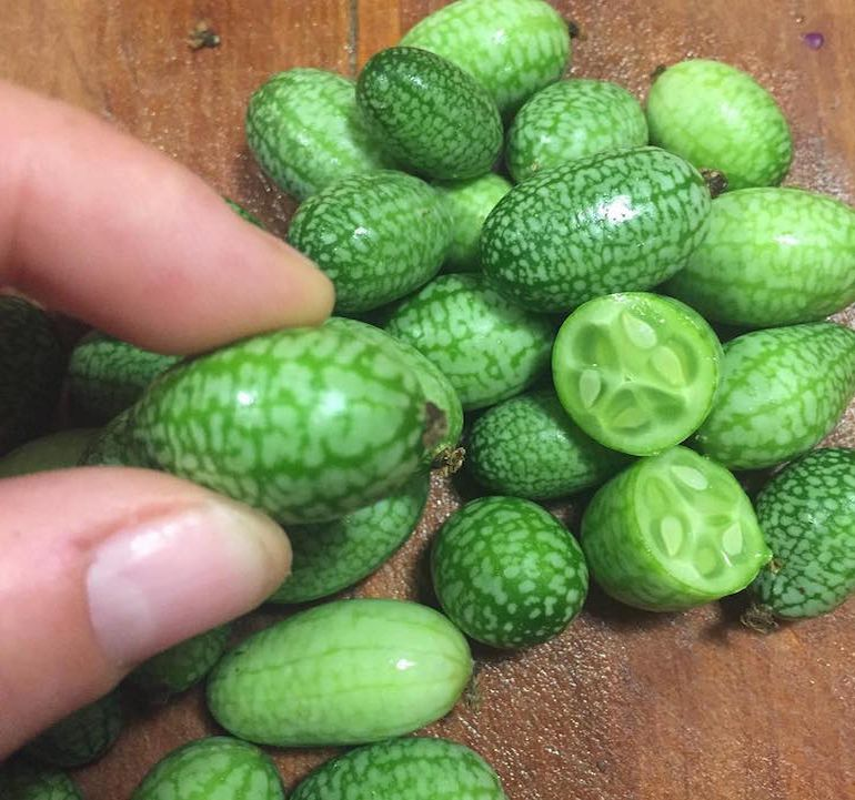 Cucamelons Tangy, Grape-Sized Hybrids Of Cucumbers And Melons-4