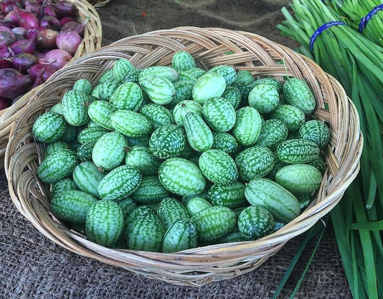Cucamelons Tangy, Grape-Sized Hybrids Of Cucumbers And Melons-5