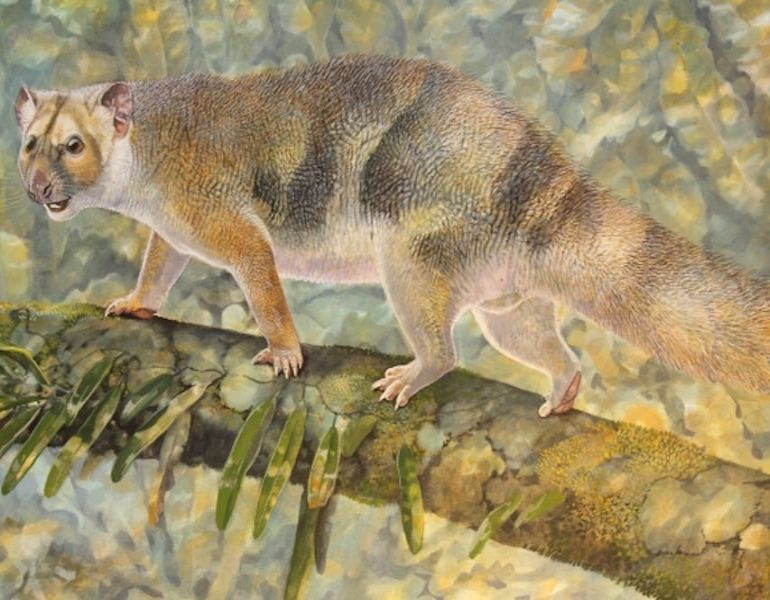 Researchers Discover New Species Of Now-Extinct Marsupial Lion Family-1