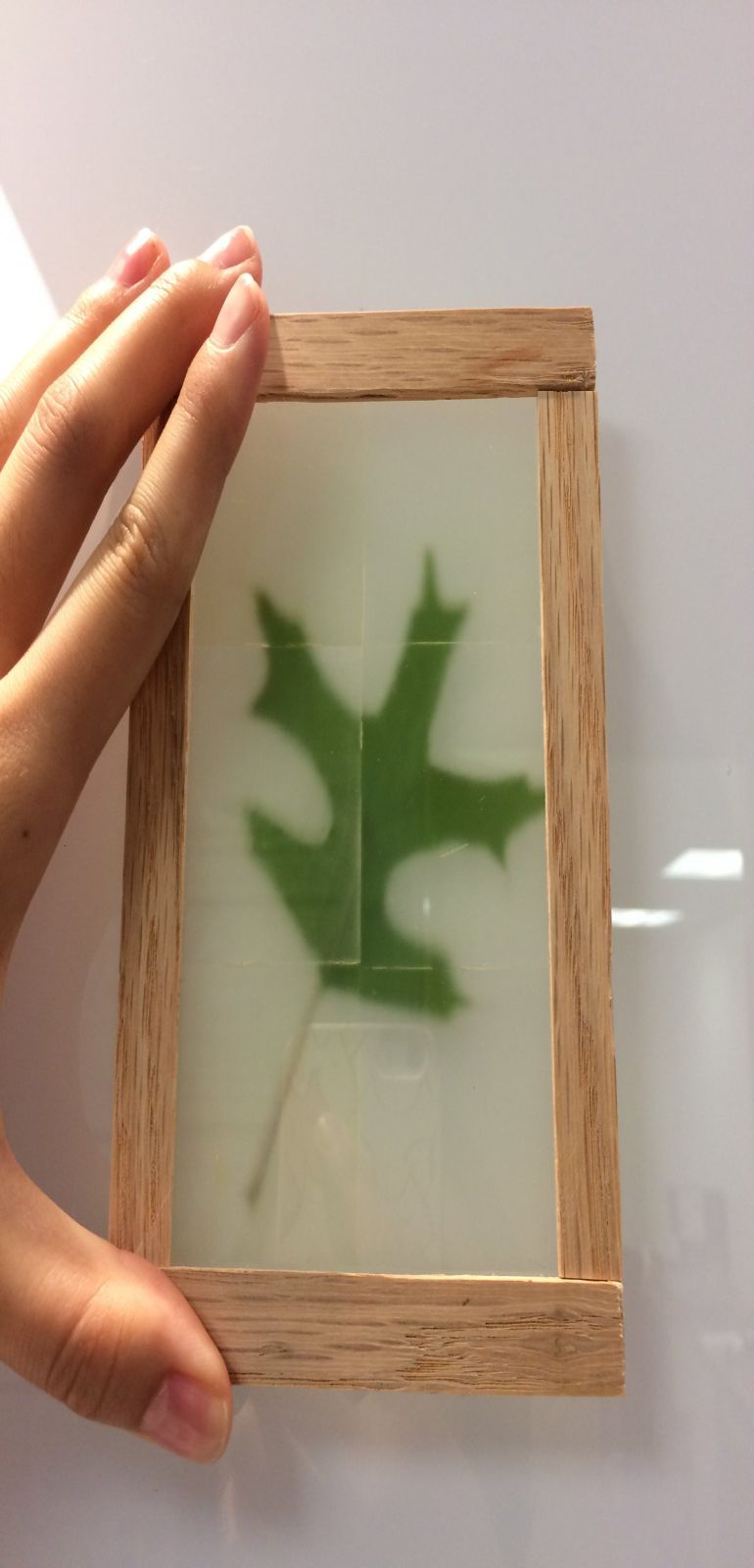 Scientists Have Developed See-Through Wood That Is Incredibly Strong-1