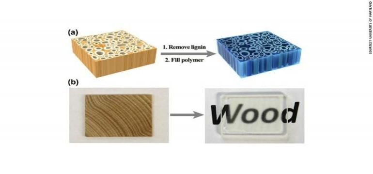 Scientists Have Developed See-Through Wood That Is Incredibly Strong-3
