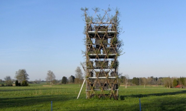 Baubotanik A Living, Breathing Tower Built Using An Actual Tree-10