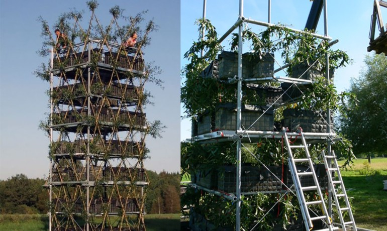 Baubotanik A Living, Breathing Tower Built Using An Actual Tree-11