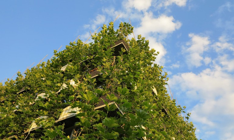 Baubotanik A Living, Breathing Tower Built Using An Actual Tree-3
