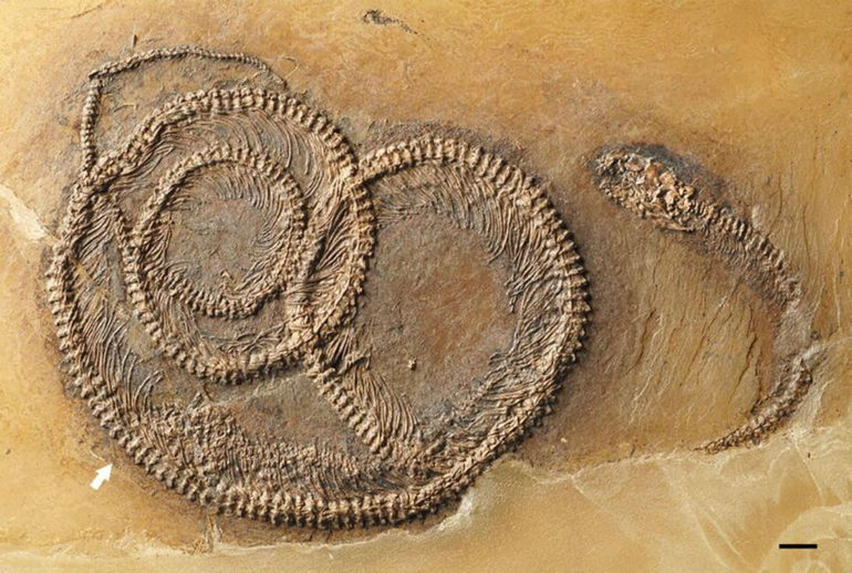bizarre-fossil-contains-a-bug-inside-a-lizard-inside-a-snake-2