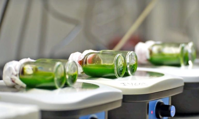 cars-of-the-future-could-be-powered-by-hydrogen-from-algae-1