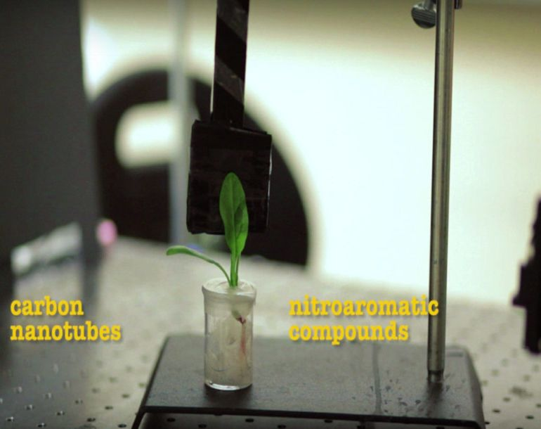 mit-scientists-turn-spinach-leaves-into-powerful-bomb-detectors-2