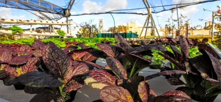 Israel's Oldest Shopping Mall Now Houses A Rooftop Organic Hydroponic Farm-1