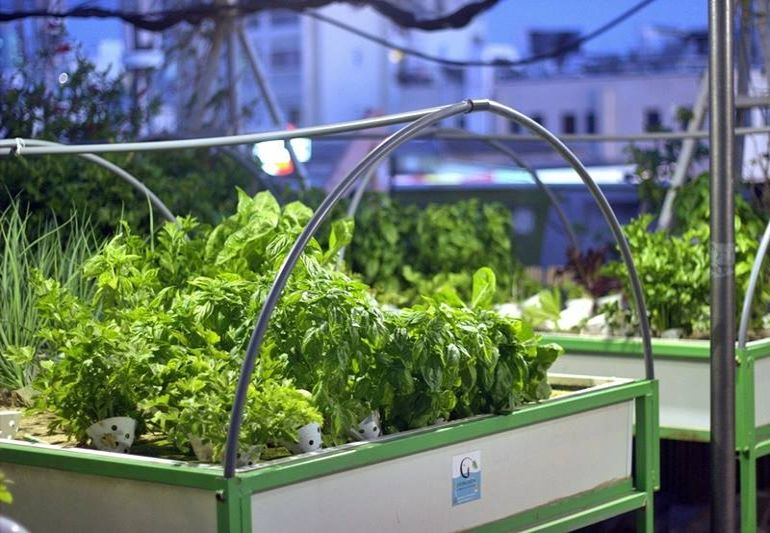 Israel's Oldest Shopping Mall Now Houses A Rooftop Organic Hydroponic Farm-6