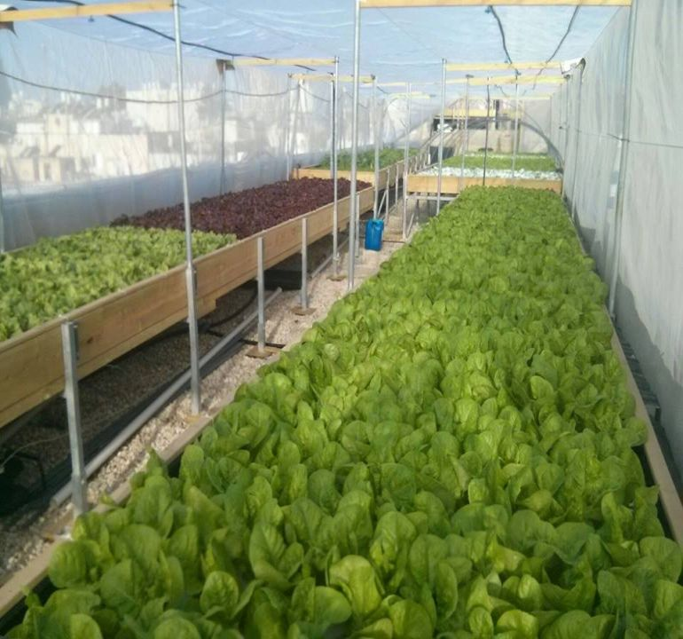 Israel's Oldest Shopping Mall Now Houses A Rooftop Organic Hydroponic Farm-7
