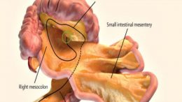 Scientists Have Officially Identified A New Organ In The Human Body-2