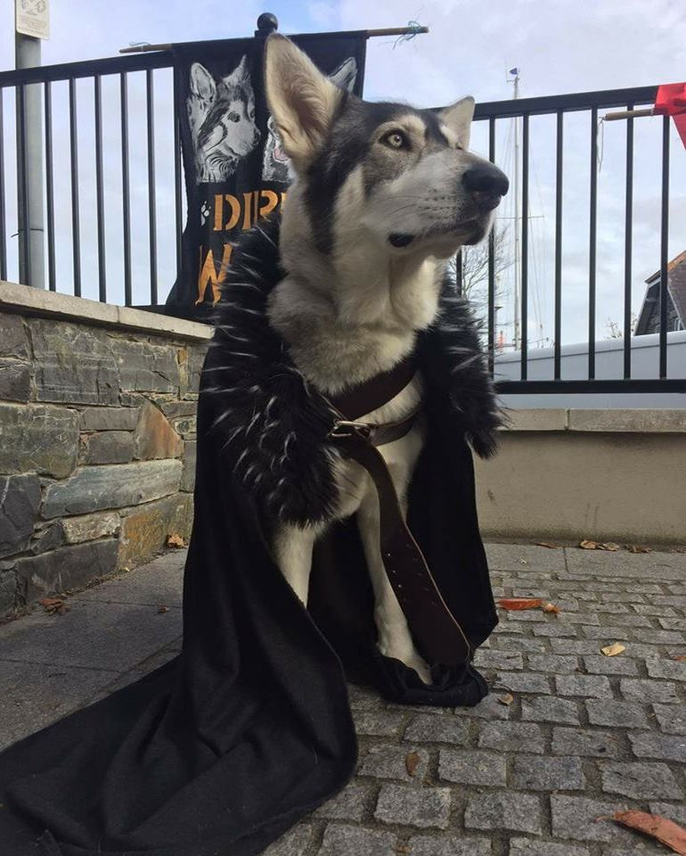 Summer and Grey Wind, the direwolves in Game of Thrones are now on social media-6