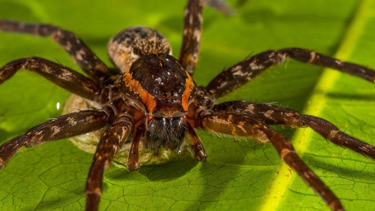 Spiders consume food twice the weight of all human adults every year, study reveals-1