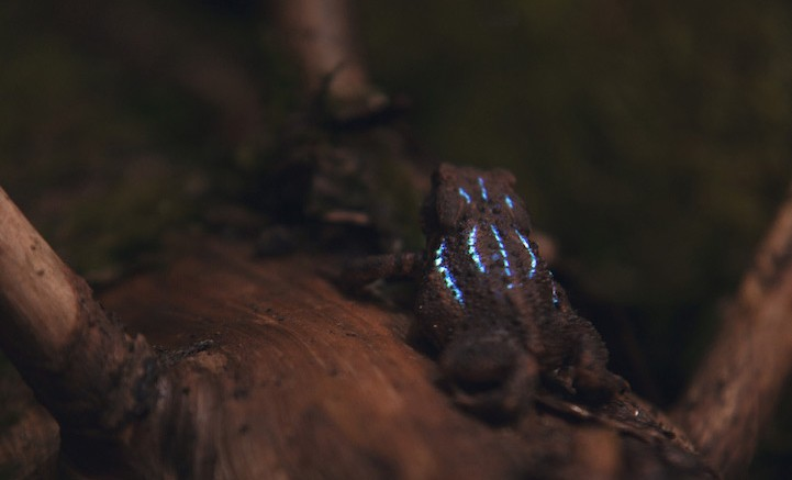 Bioluminescent_Forest_1