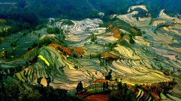 Paddy_Fields_Art_ Asia_9