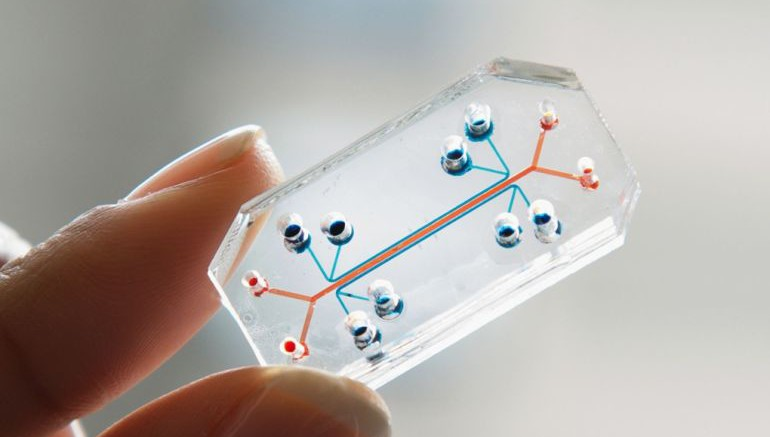 Human Organs-on-Chips-1