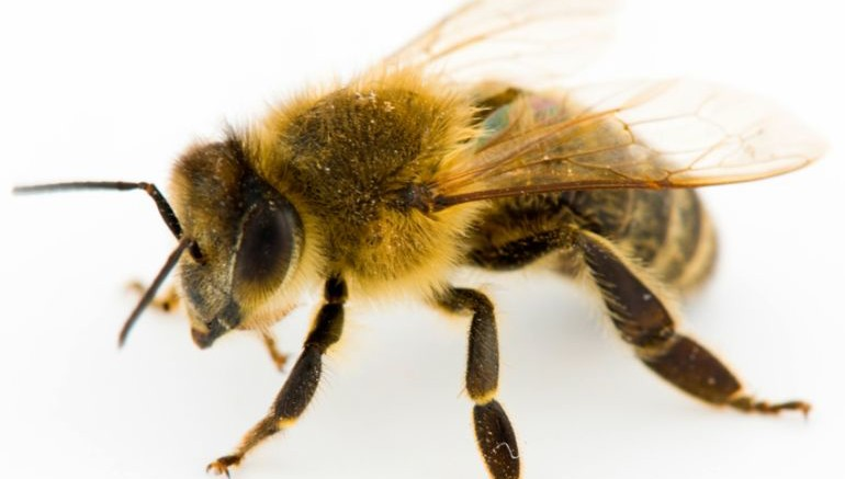 Police Could Soon Use Honeybees To Curb Drug Trafficking-3