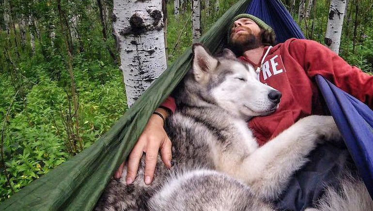 Meet Loki, The Wolfdog With 392,000 Instagram Followers-1