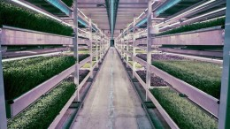 WWII Bomb Shelter Becomes London's First Underground Farm-1