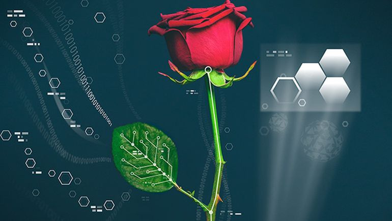 Cyborg_Plants_Electronic_Circuit_Agriculture