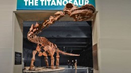 Museum Creates 3D-Printed Replica Of World's Largest Dinosaur-1