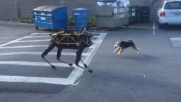 Amazing Video Shows A Terrier Locked In Battle With A Robotic Dog-2