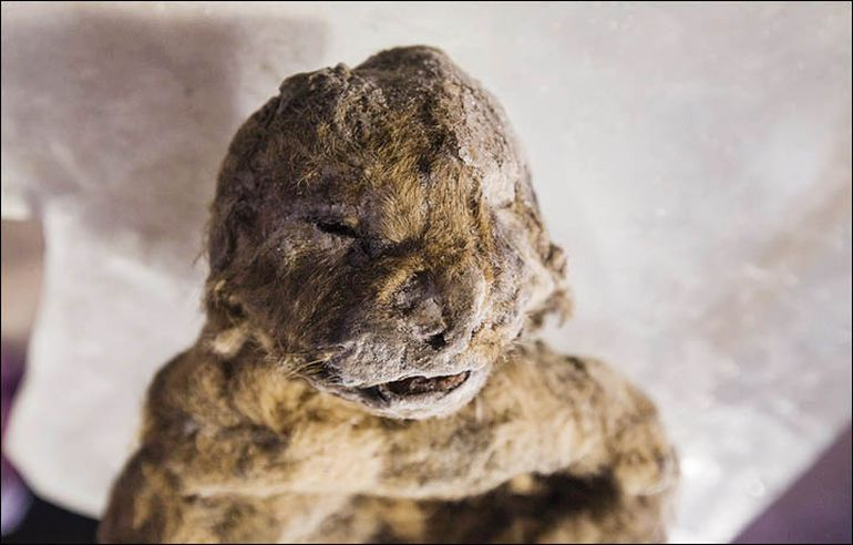 South Korean Scientists To De-Extinct Prehistoric Cave Lion-1