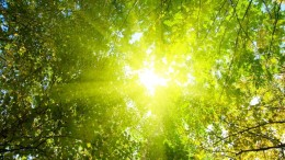 Reverse Photosynthesis Uses Sunlight To Break Down Biomass-2