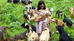 This Tiny Haven In Costa Rica Is Home To 900 Adoptable Dogs-1