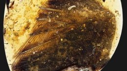 99-Million-Year-Old Dinosaur Wings With Feathers Discovered-1