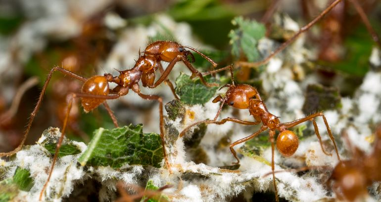 Worlds-First-Farmers-Were-Insects-Not-Humans-New-Study-Reveals-2