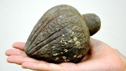Crusader-Era Grenade Found In Power Plant Worker's Artifact Collection-1