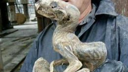 Mummified Mammal Found In Siberian Diamond Mine Not Yet Identified-1