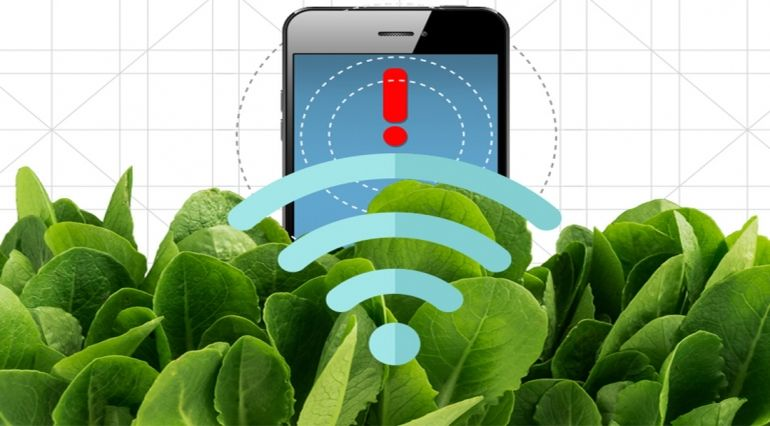 mit-scientists-turn-spinach-leaves-into-powerful-bomb-detectors-1