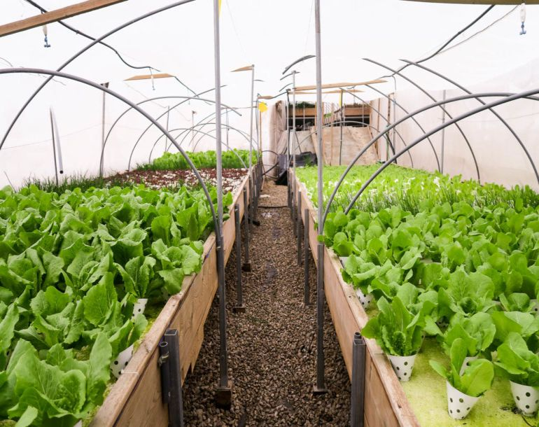 Israel's Oldest Shopping Mall Now Houses A Rooftop Organic Hydroponic Farm-2