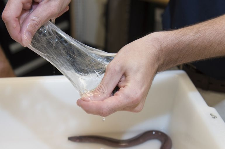 Synthetic Hagfish Slime Could Help The US Navy Stop Enemy Missiles And Shark Attacks-4