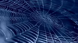 Synthetic Spider Silk Could Revolutionize Drug Delivery And Wound Care-1