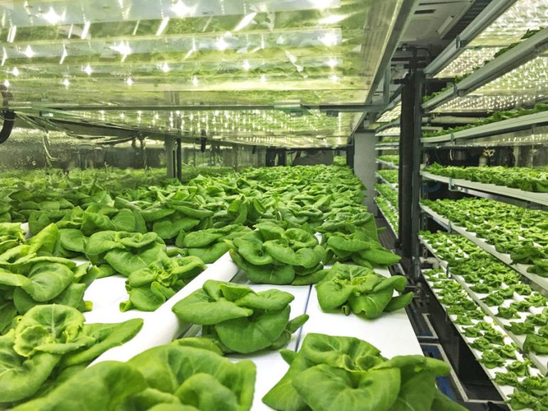 shipping-container-terrafarms-hydroponic_1
