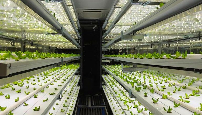 shipping-container-terrafarms-hydroponic_3