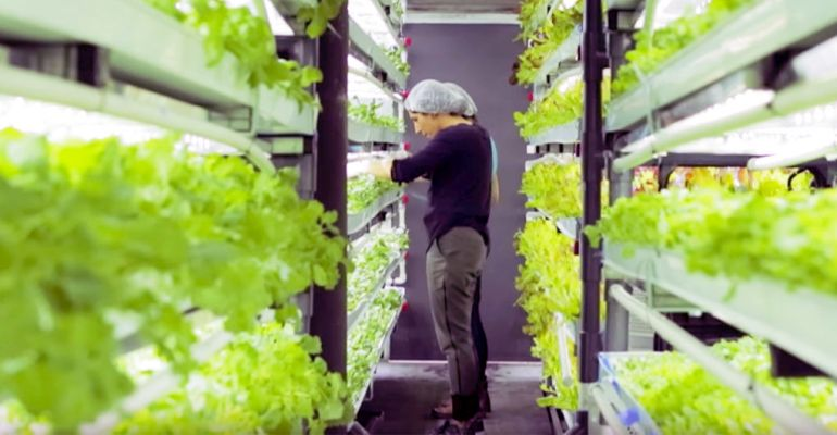 shipping-container-terrafarms-hydroponic_4