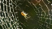 graphene-fed-spiders-strongest-material_1