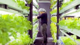 4-advanced-hydroponic-solutions